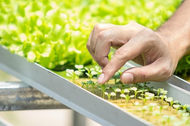 Hand aanraken van kleine planten