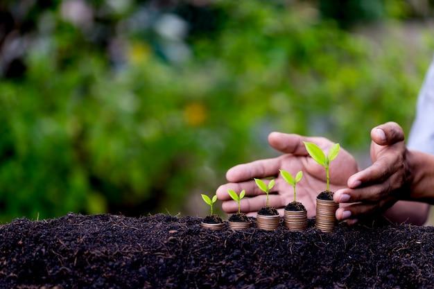 Hand bescherming geld munten zoals groeiende grafiek, plant ontspruiten uit de grond met groene achtergrond.