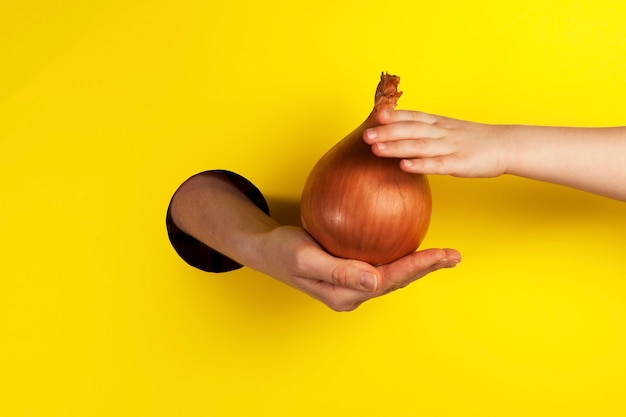 Hand biedt uien aan door het gat. de hand van een kind probeert een enorme knolgewas te pakken.