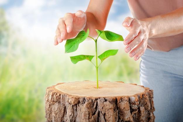Hand die betrekking heeft op groene plant in het bos. symbool nieuw leven. concept eco aarde dag.