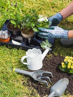Hand die bloeiende zaailing in tuin houdt