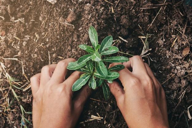 Hand die boom in grond met zonsondergang planten bij tuin