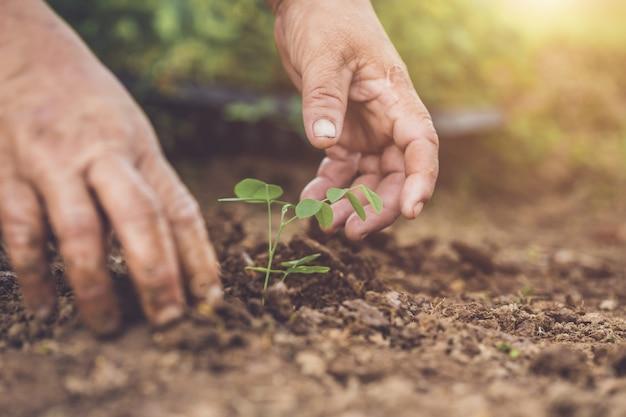 Hand die en de jonge boom van de vlindererwt houden in grond zaaien. bewaar wereld en ecologie concept