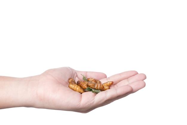Hand die gefrituurde zijderupslarve, een insecthoogtepunt van proteïne, beroemd thais straatvoedsel houdt