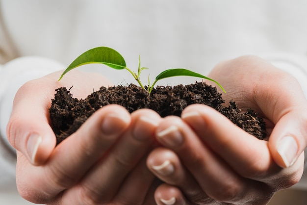 Hand die groene spruit met grond houdt