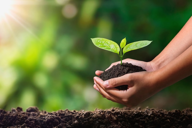 Hand die jonge plant met zonlicht houdt. concept eco aarde dag
