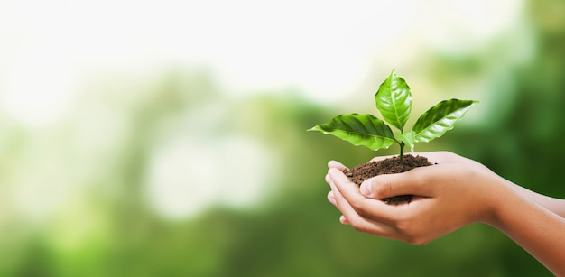 Hand die jonge plant op onduidelijk beeld groene aard houdt. concept eco aarde dag