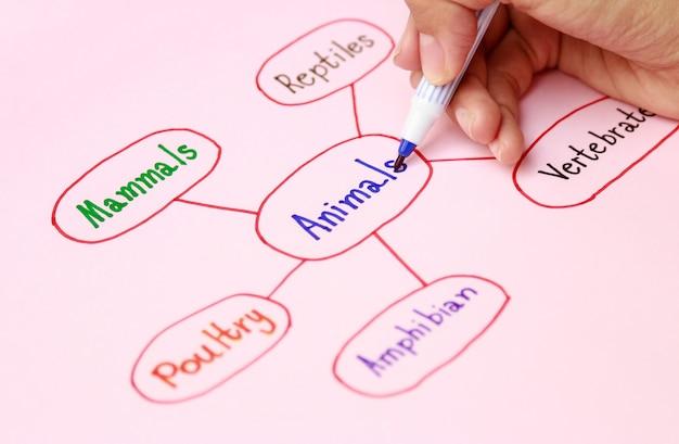 Hand die mindmap maakt voor leeractiviteit