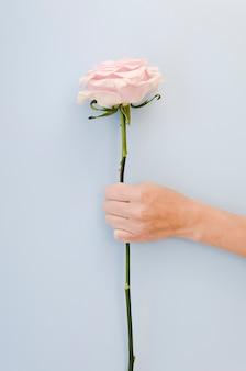Hand die mooi roze studioschot houdt