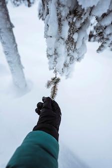 Hand die reikt naar een besneeuwde boom in riisitunturi national park, finland