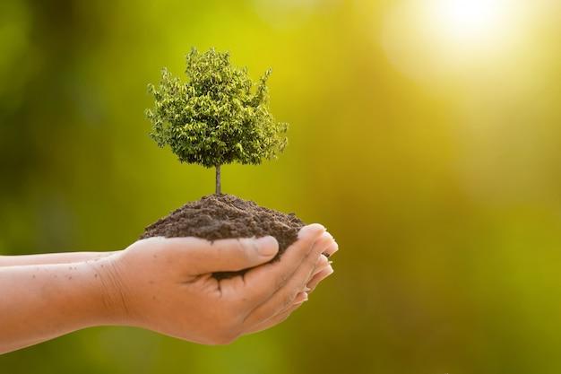 Hand die tropische boom in grond op groen tuinonduidelijk beeld houdt. groei en milieu concept