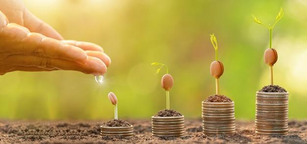 Hand die water geeft aan kleine boom bovenop muntstukstapel. zakelijk succes, financieel of geld groeiend concept