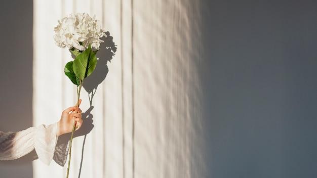 Hand die witte de lentebloem houdt