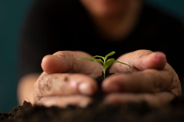 Hand die zachtjes rijke aarde vasthoudt voor zijn marihuanaplanten