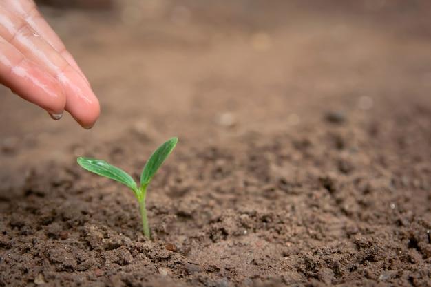 Hand drenken groene spruit groeien uit grond met kopie ruimte