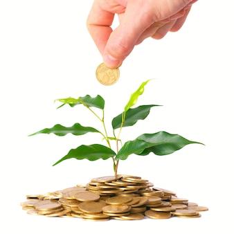 Hand en groene boom groeien uit de stapel gouden munten. geld financieel concept.