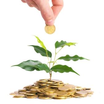 Hand en groene plant groeit uit de munten. geld financieel concept.