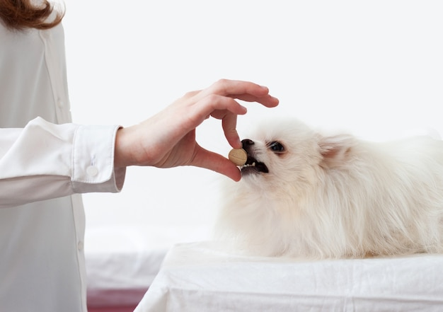 Hand geeft pil aan een witte pommerse hond, die zijn mond heeft geopend.