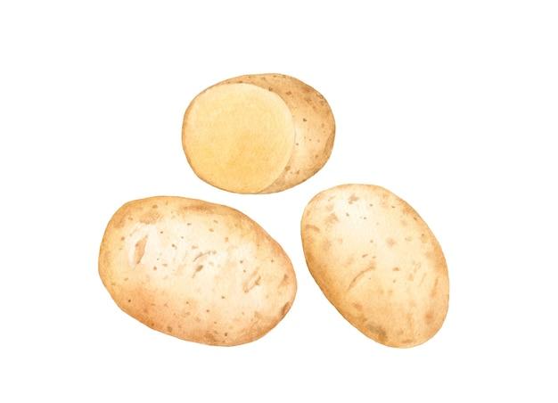 Hand getekend aquarel aardappelen.