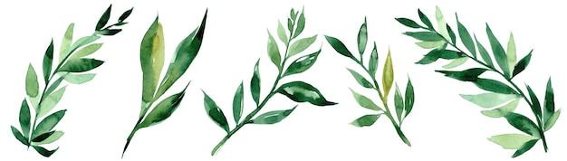 Hand getekend aquarel illustratie van abstracte groene tak. elementen voor het ontwerpen van uitnodigingen, filmposters, stoffen en andere objecten