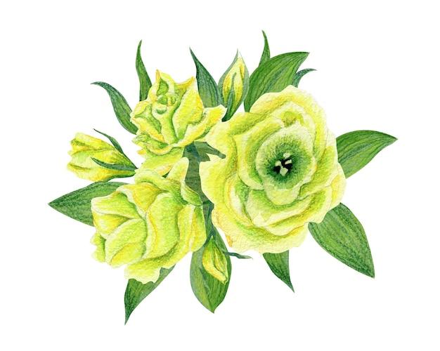 Hand getekend aquarel illustratie van gele eustoma geïsoleerd. ontwerpelement voor uitnodigingen en stoffen