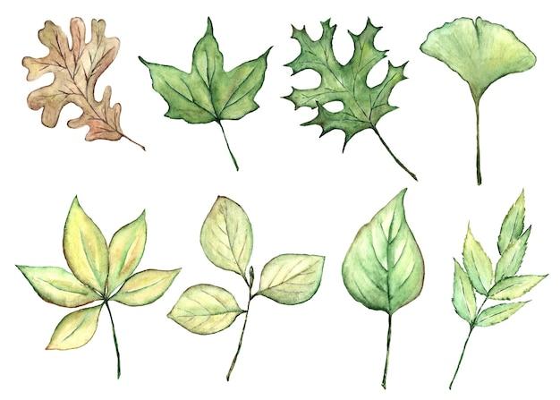 Hand getekend botanische aquarel set takken met groene bladeren