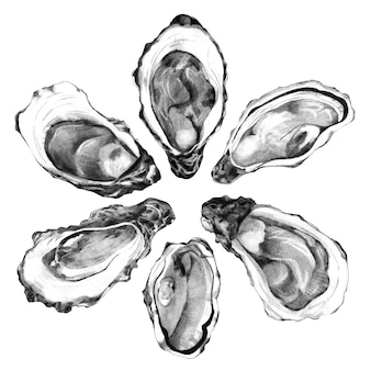 Hand getrokken oesterschelpen