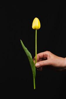 Hand houdt een groot boeket van delicate veelkleurige tulpen