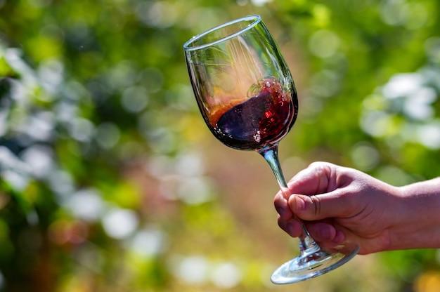 Hand houdt glas met rode wijn naast druiven in wijngaard