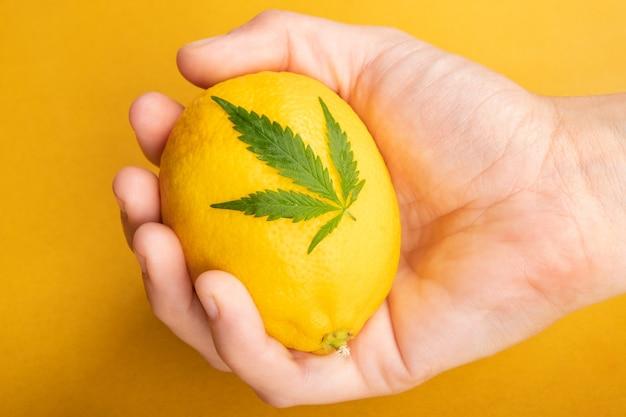 Hand met citroen en cannabisblad op gele achtergrond.