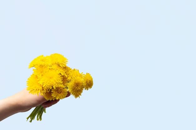 Hand met een boeket van gele wilde bloemen paardebloemen in de hand op een blauwe achtergrond, kopieer ruimte. heldere lente wilde bloemen.