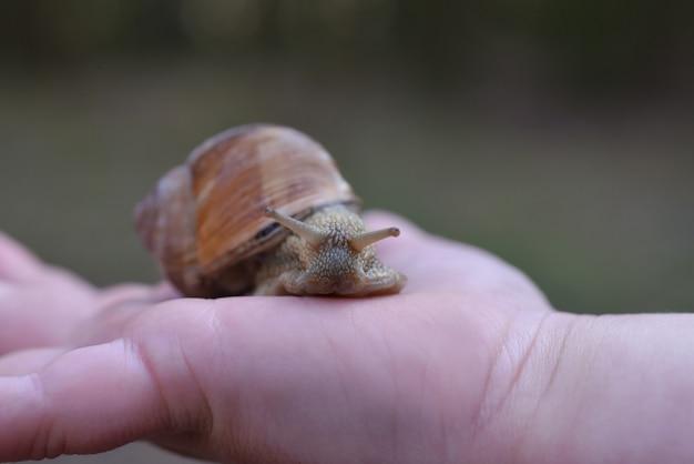 Hand met een bos druivenslak