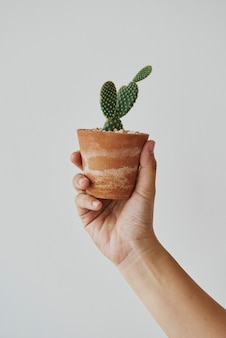 Hand met een kleine cactus in een schattige pot