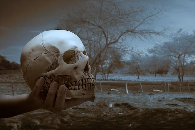 Hand met een menselijke schedel