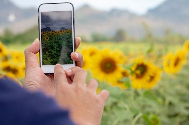 Hand met een smartphone die foto van zonnebloemen neemt