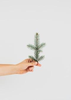 Hand met een tak van dennenboom