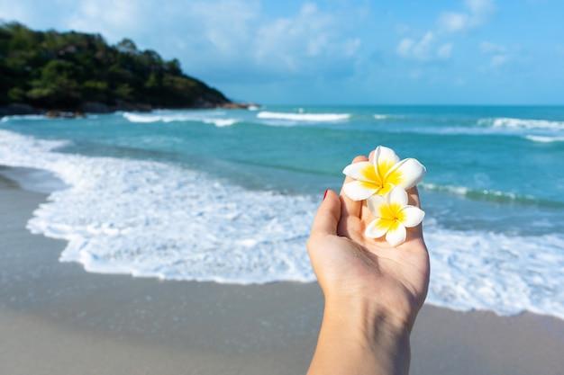 Hand met frangipani bloemen