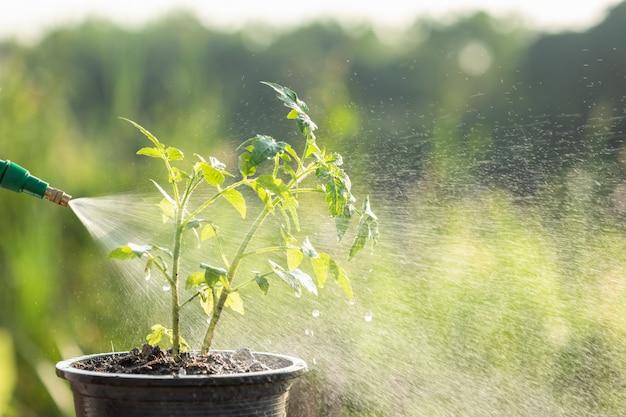 Hand met gieter en spuit naar jonge plant in de tuin