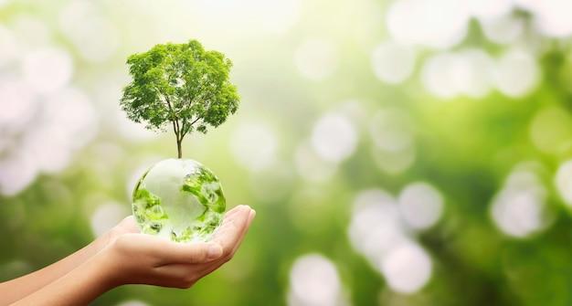 Hand met glazen bol bal met boom groeiende en groene natuur achtergrond. eco milieu concept