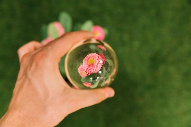 Hand met glazen bol over de roze bloem