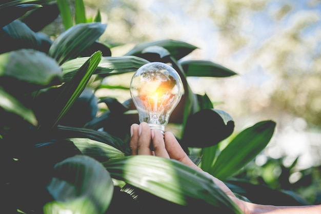Hand met gloeilamp, energiebronnen voor hernieuwbare, natuurlijke energie en hou van het wereldconcept.