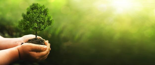 Hand met groene grote boom groeit op zonnige groene natuur achtergrond. milieu wereld aarde dag. eco concept.