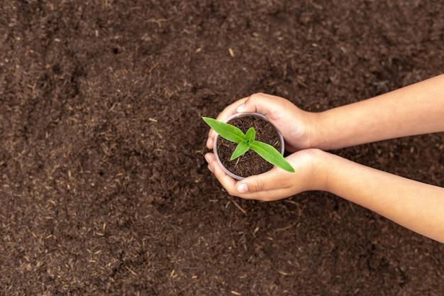 Hand met groene plant zaailing op zwarte vruchtbare grond concept van zorg en bescherming van de planeet