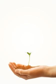 Hand met kleine boom om te planten. plantengroei evolutie van zaad tot jonge boom, ecologie concept. zaailing, teelt. landbouw, tuinbouw.