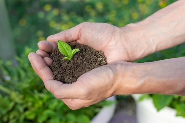 Hand met kleine boom voor het planten concept groene wereld aarde dag