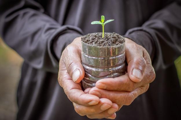Hand met kleine plant groeit