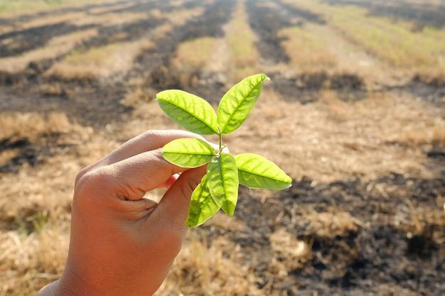 Hand met kleine plant