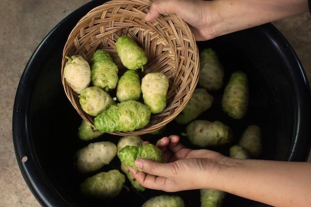 Hand met noni fruit in mand en noni fruitbekken..jpg