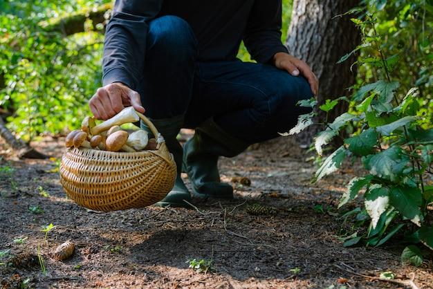 Hand met paddenstoelenmand in het bos bij de herfst