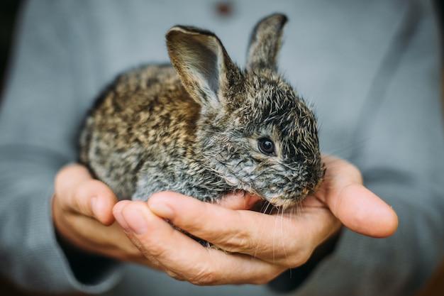 Hand met schattig konijn. een man houdt een klein konijn in zijn handpalmen.